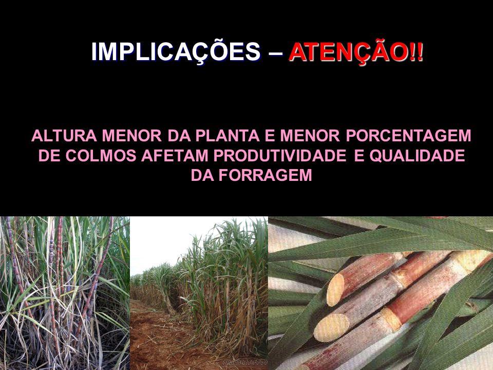IMPLICAÇÕES – ATENÇÃO!!ALTURA MENOR DA PLANTA E MENOR PORCENTAGEM DE COLMOS AFETAM PRODUTIVIDADE E QUALIDADE DA FORRAGEM.