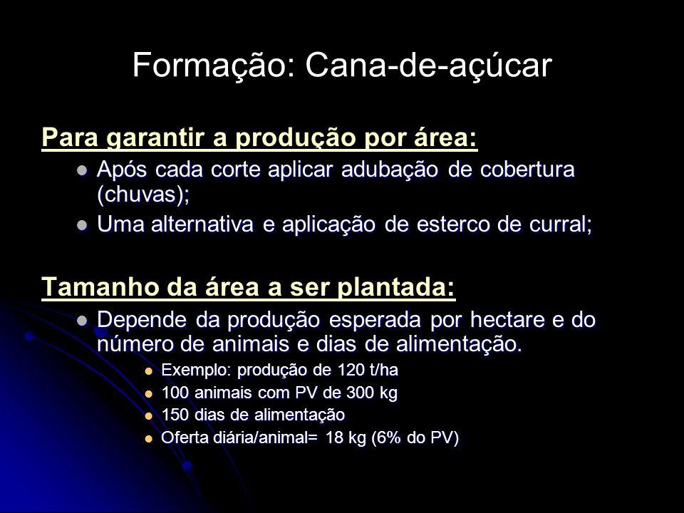 Formação: Cana-de-açúcar