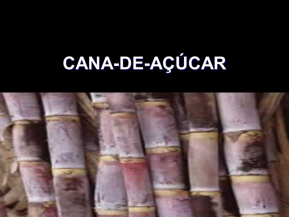CANA-DE-AÇÚCAR