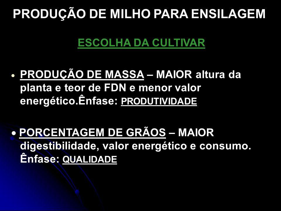 PRODUÇÃO DE MILHO PARA ENSILAGEM
