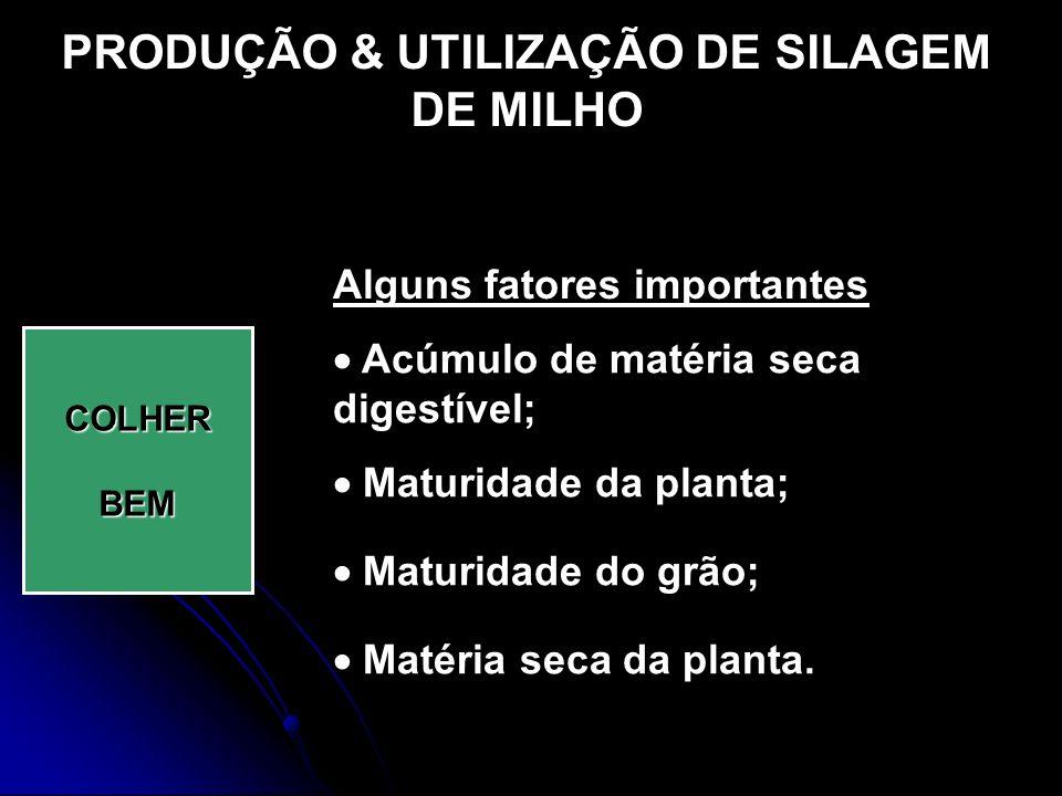 PRODUÇÃO & UTILIZAÇÃO DE SILAGEM DE MILHO