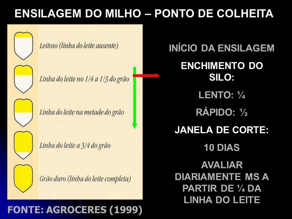 ENSILAGEM DO MILHO – PONTO DE COLHEITA
