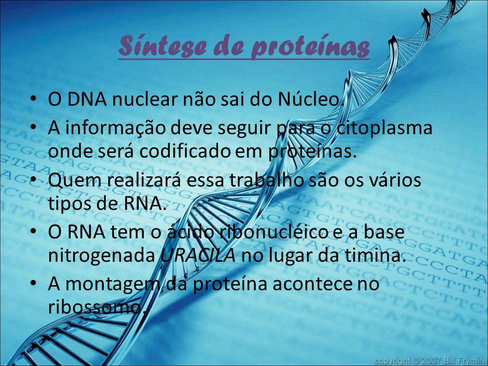 Síntese de proteínas O DNA nuclear não sai do Núcleo.
