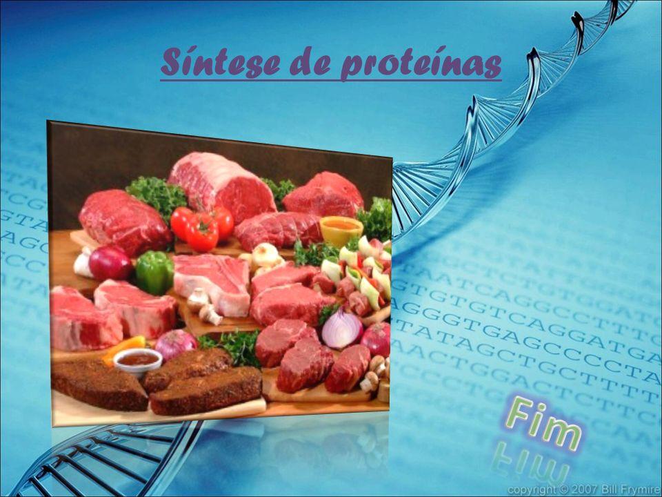 Síntese de proteínas Fim
