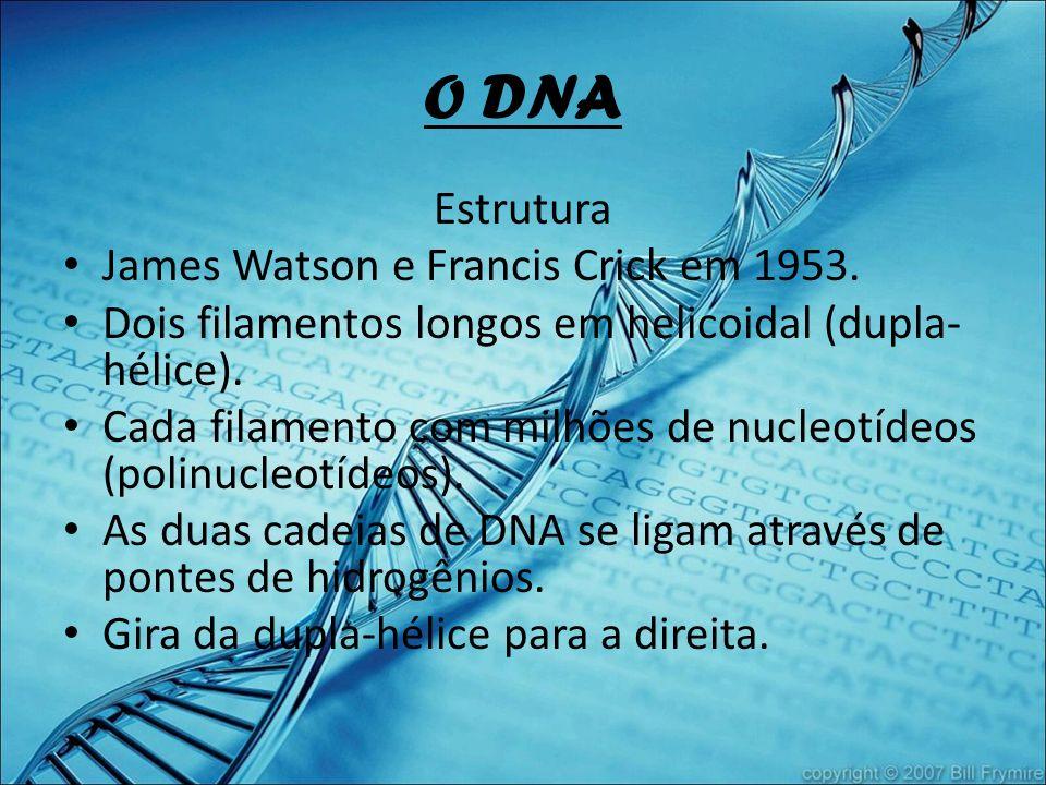 O DNA Estrutura James Watson e Francis Crick em 1953.