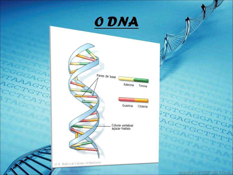 O DNA