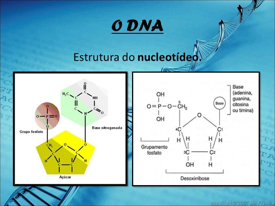 Estrutura do nucleotídeo.