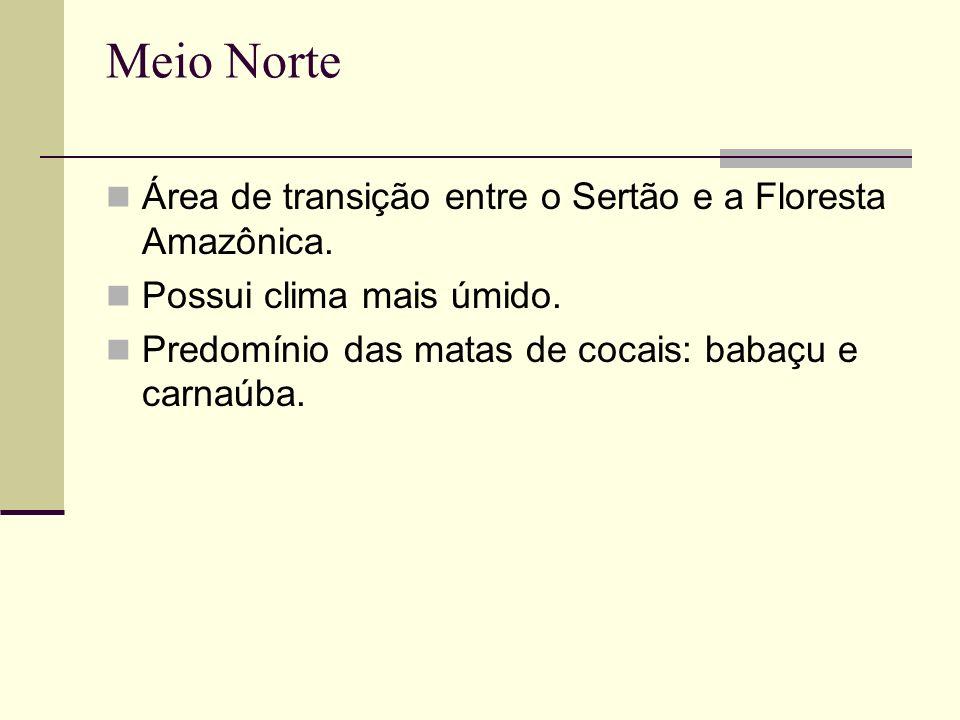 Meio Norte Área de transição entre o Sertão e a Floresta Amazônica.