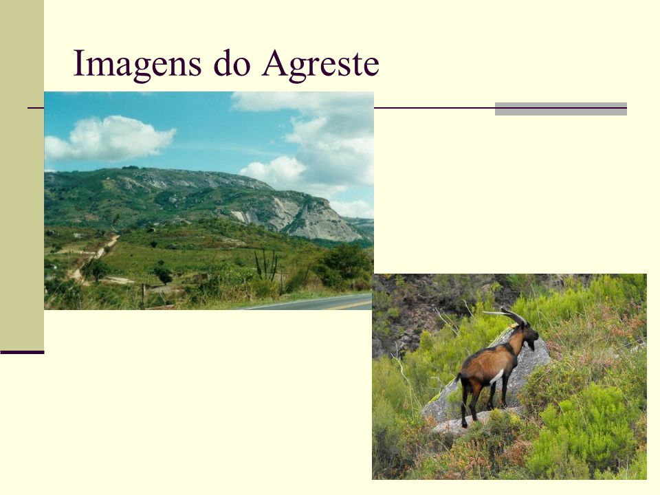 Imagens do Agreste
