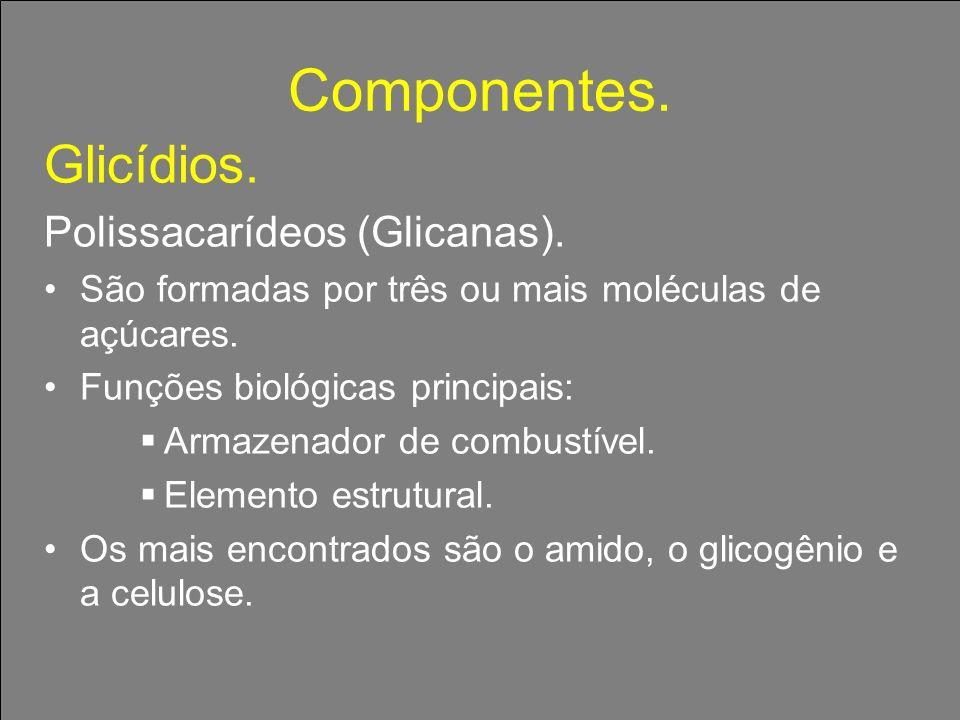 Componentes. Glicídios. Polissacarídeos (Glicanas).