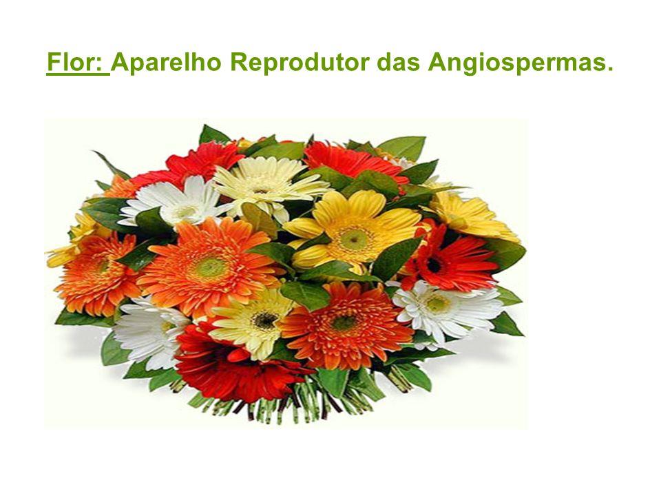 Flor: Aparelho Reprodutor das Angiospermas.