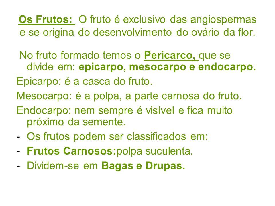 Os Frutos: O fruto é exclusivo das angiospermas e se origina do desenvolvimento do ovário da flor.