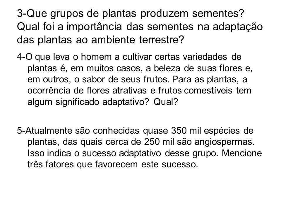 3-Que grupos de plantas produzem sementes