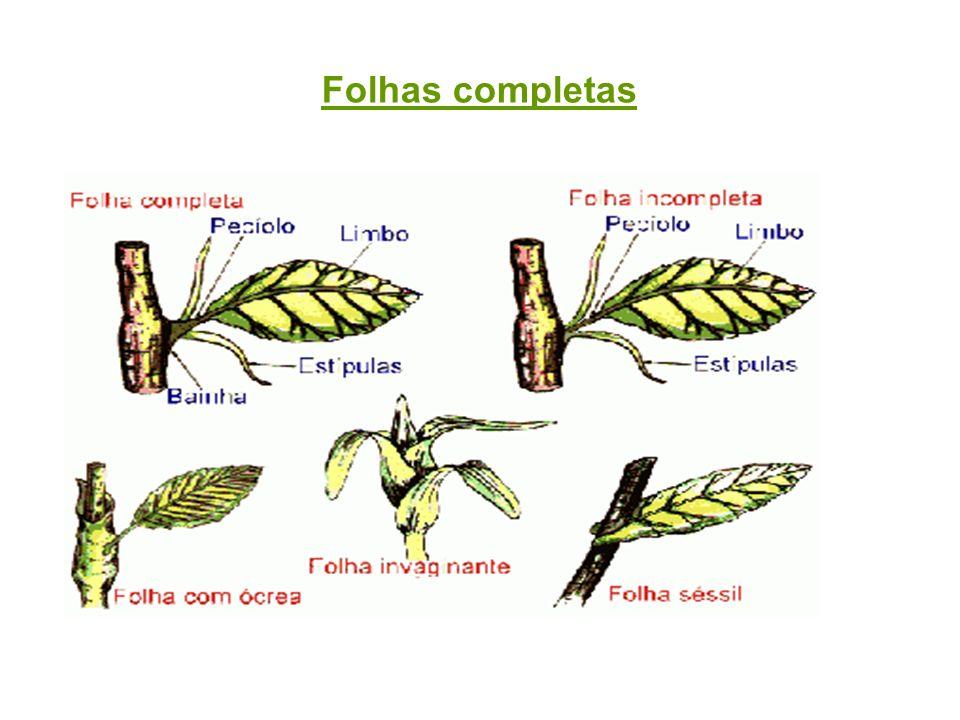 Folhas completas