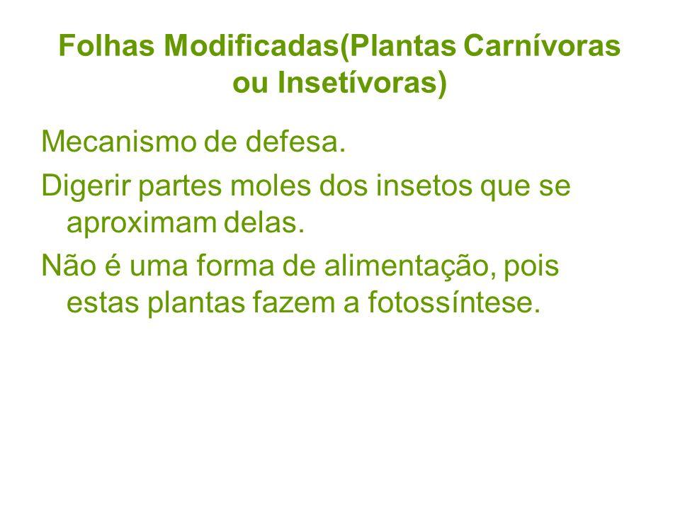 Folhas Modificadas(Plantas Carnívoras ou Insetívoras)