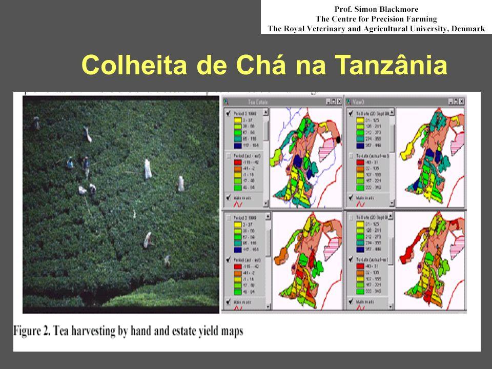 Colheita de Chá na Tanzânia