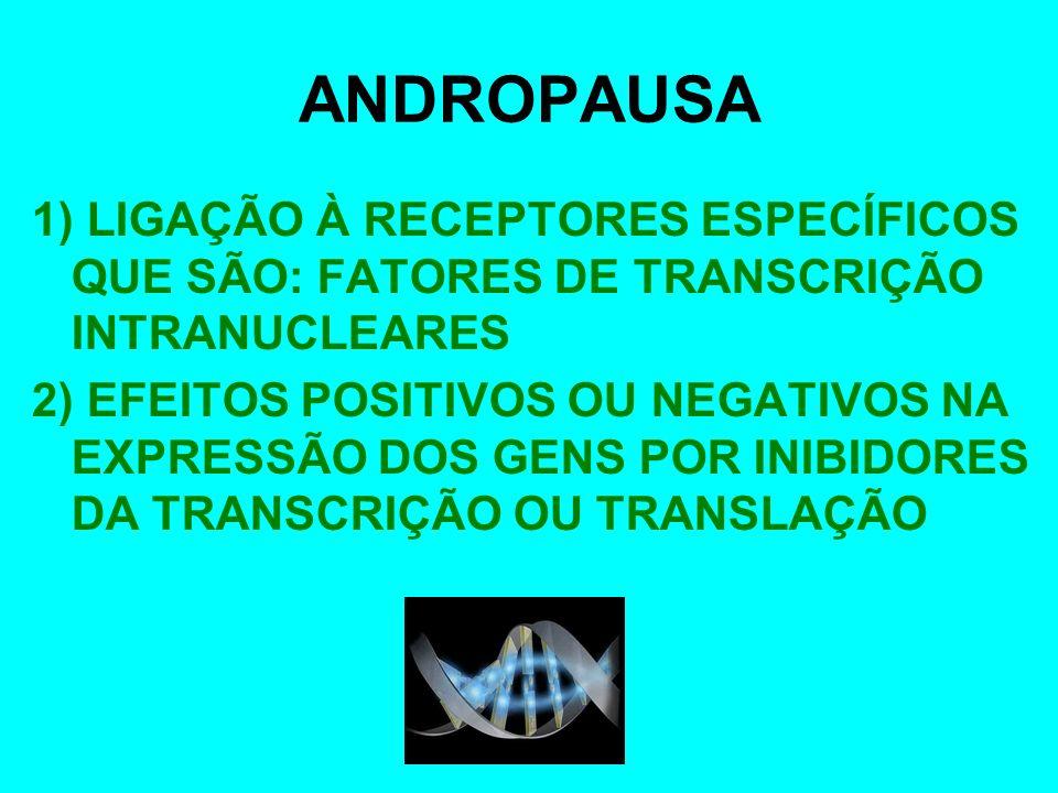 ANDROPAUSA1) LIGAÇÃO À RECEPTORES ESPECÍFICOS QUE SÃO: FATORES DE TRANSCRIÇÃO INTRANUCLEARES.