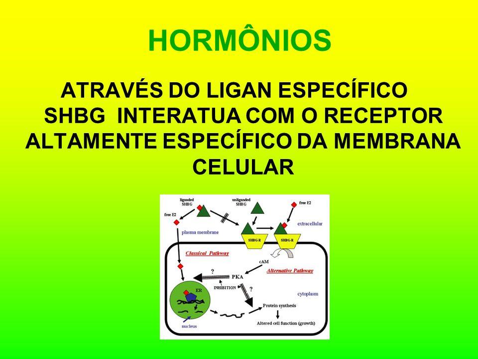 HORMÔNIOS ATRAVÉS DO LIGAN ESPECÍFICO SHBG INTERATUA COM O RECEPTOR ALTAMENTE ESPECÍFICO DA MEMBRANA CELULAR.
