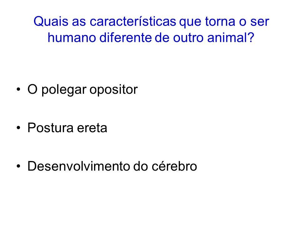 Quais as características que torna o ser humano diferente de outro animal