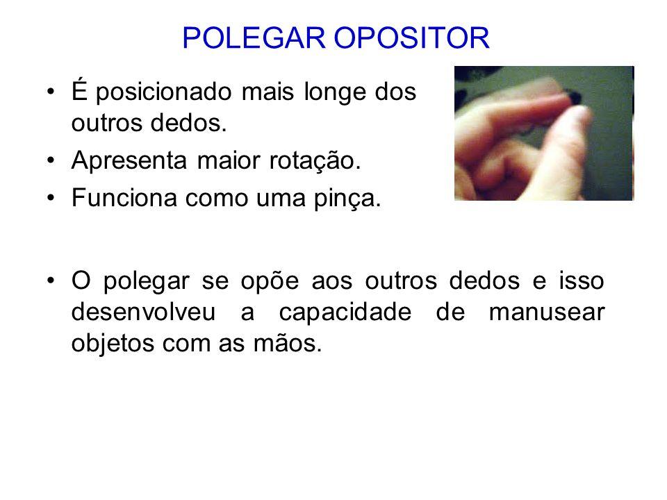 POLEGAR OPOSITOR É posicionado mais longe dos outros dedos.
