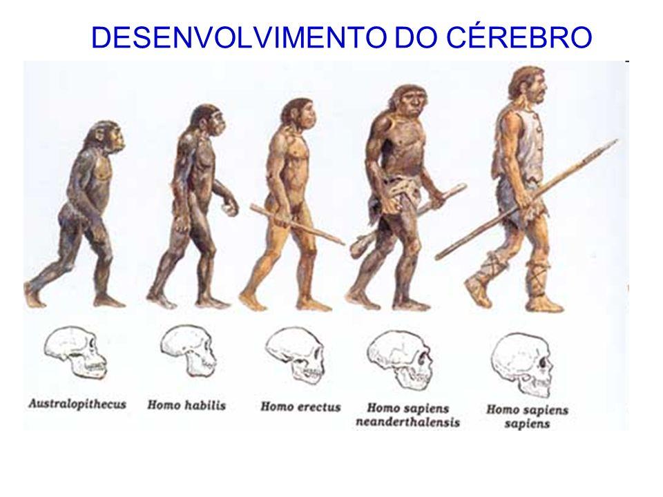 DESENVOLVIMENTO DO CÉREBRO