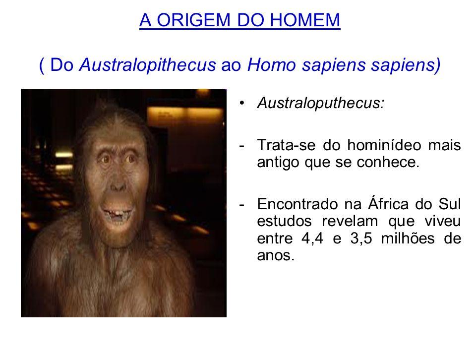 A ORIGEM DO HOMEM ( Do Australopithecus ao Homo sapiens sapiens)