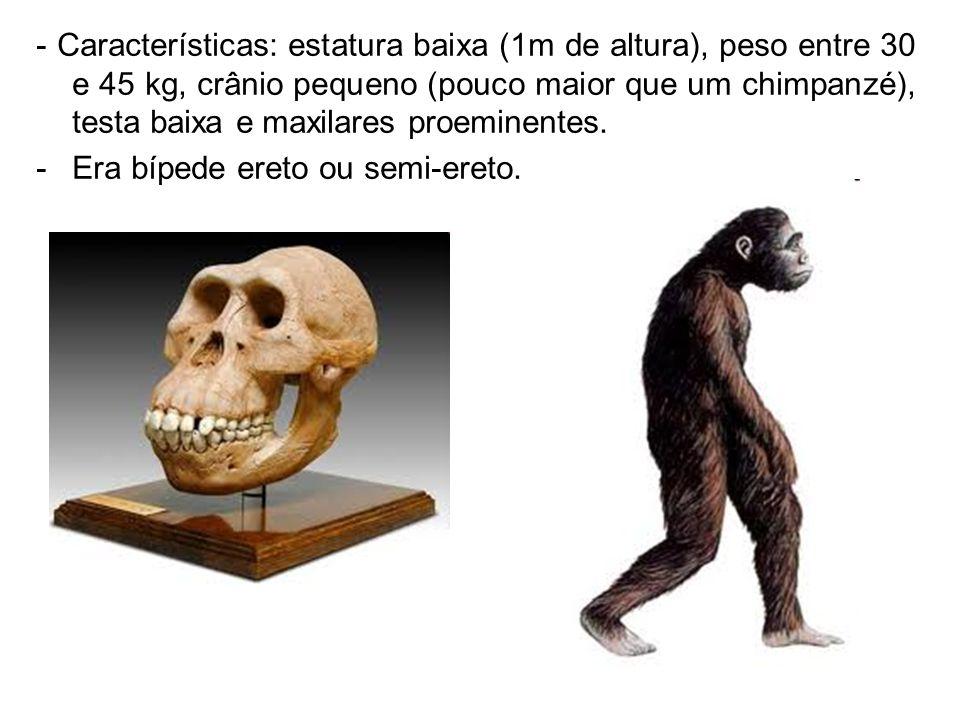 - Características: estatura baixa (1m de altura), peso entre 30 e 45 kg, crânio pequeno (pouco maior que um chimpanzé), testa baixa e maxilares proeminentes.
