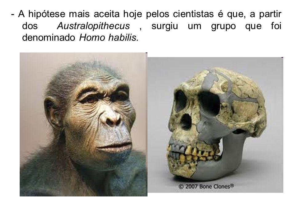 - A hipótese mais aceita hoje pelos cientistas é que, a partir dos Australopithecus , surgiu um grupo que foi denominado Homo habilis.