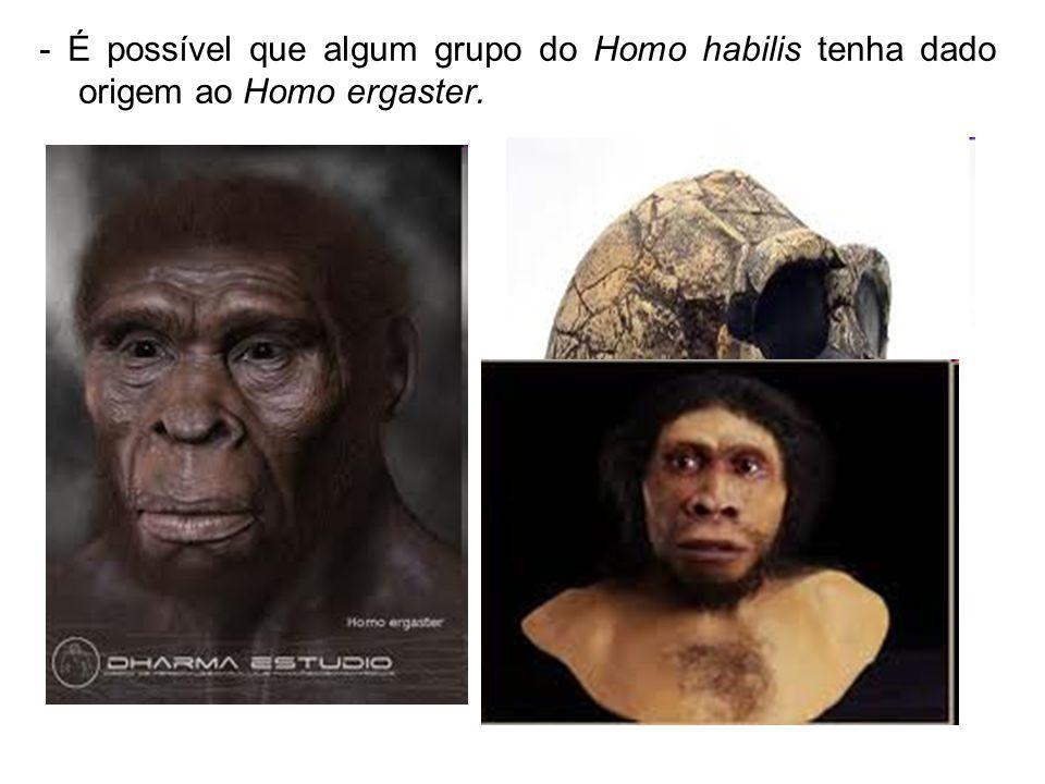 - É possível que algum grupo do Homo habilis tenha dado origem ao Homo ergaster.