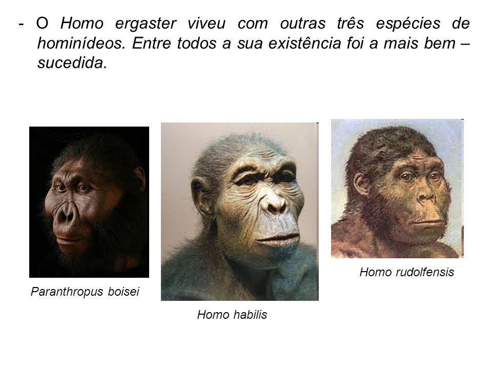 - O Homo ergaster viveu com outras três espécies de hominídeos