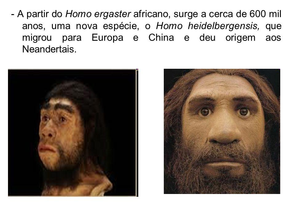 - A partir do Homo ergaster africano, surge a cerca de 600 mil anos, uma nova espécie, o Homo heidelbergensis, que migrou para Europa e China e deu origem aos Neandertais.