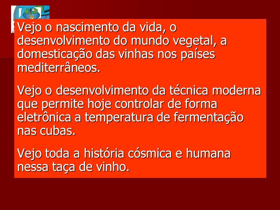 Vejo o nascimento da vida, o desenvolvimento do mundo vegetal, a domesticação das vinhas nos países mediterrâneos.