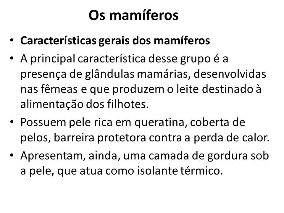 Os mamíferos Características gerais dos mamíferos