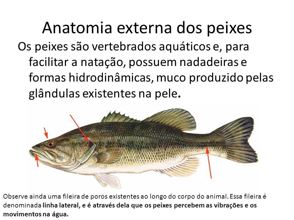 Anatomia externa dos peixes