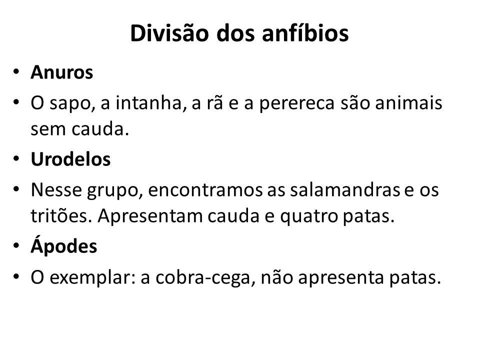 Divisão dos anfíbios Anuros