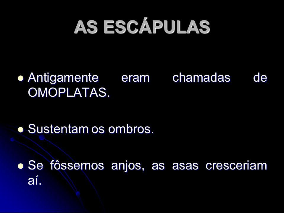 AS ESCÁPULAS Antigamente eram chamadas de OMOPLATAS.