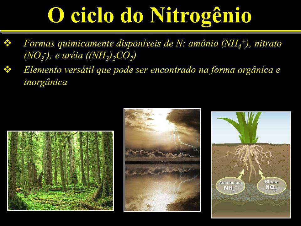 O ciclo do Nitrogênio Formas quimicamente disponíveis de N: amônio (NH4+), nitrato (NO3-), e uréia ((NH3)2CO2)