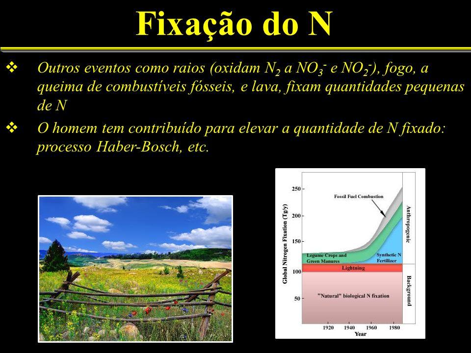 Fixação do N Outros eventos como raios (oxidam N2 a NO3- e NO2-), fogo, a queima de combustíveis fósseis, e lava, fixam quantidades pequenas de N.