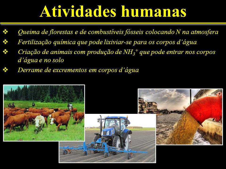 Atividades humanasQueima de florestas e de combustíveis fósseis colocando N na atmosfera.