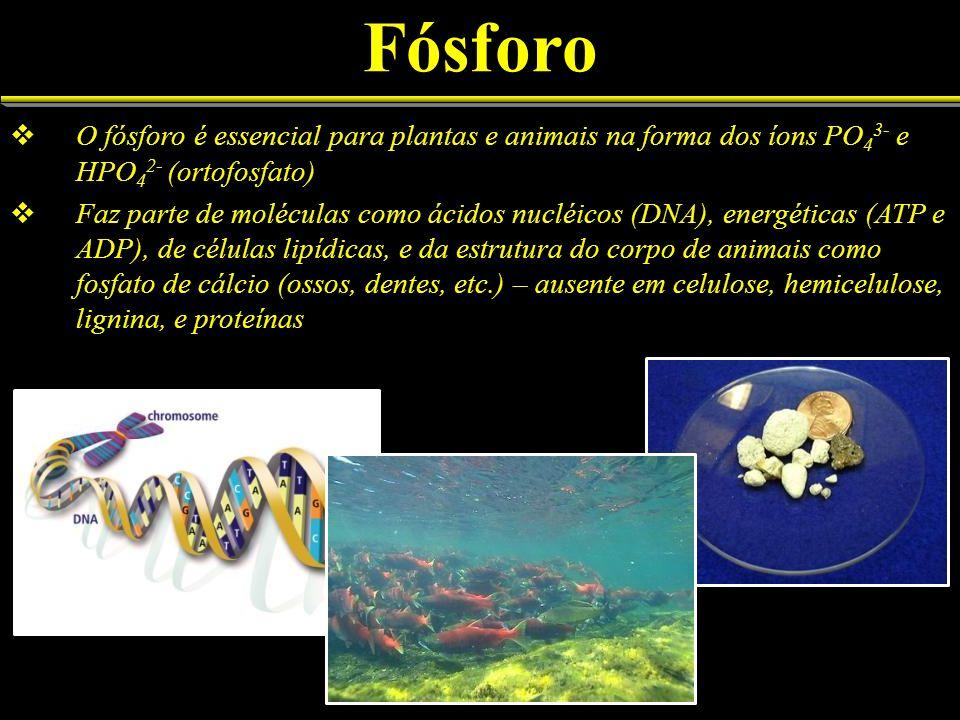 FósforoO fósforo é essencial para plantas e animais na forma dos íons PO43- e HPO42- (ortofosfato)