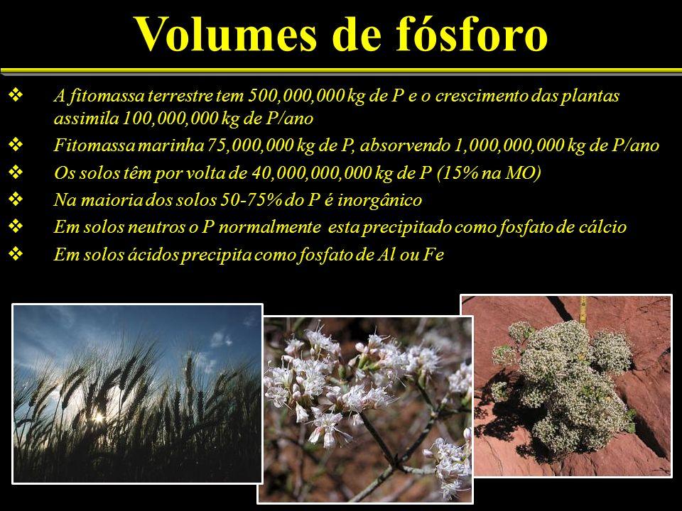 Volumes de fósforo A fitomassa terrestre tem 500,000,000 kg de P e o crescimento das plantas assimila 100,000,000 kg de P/ano.
