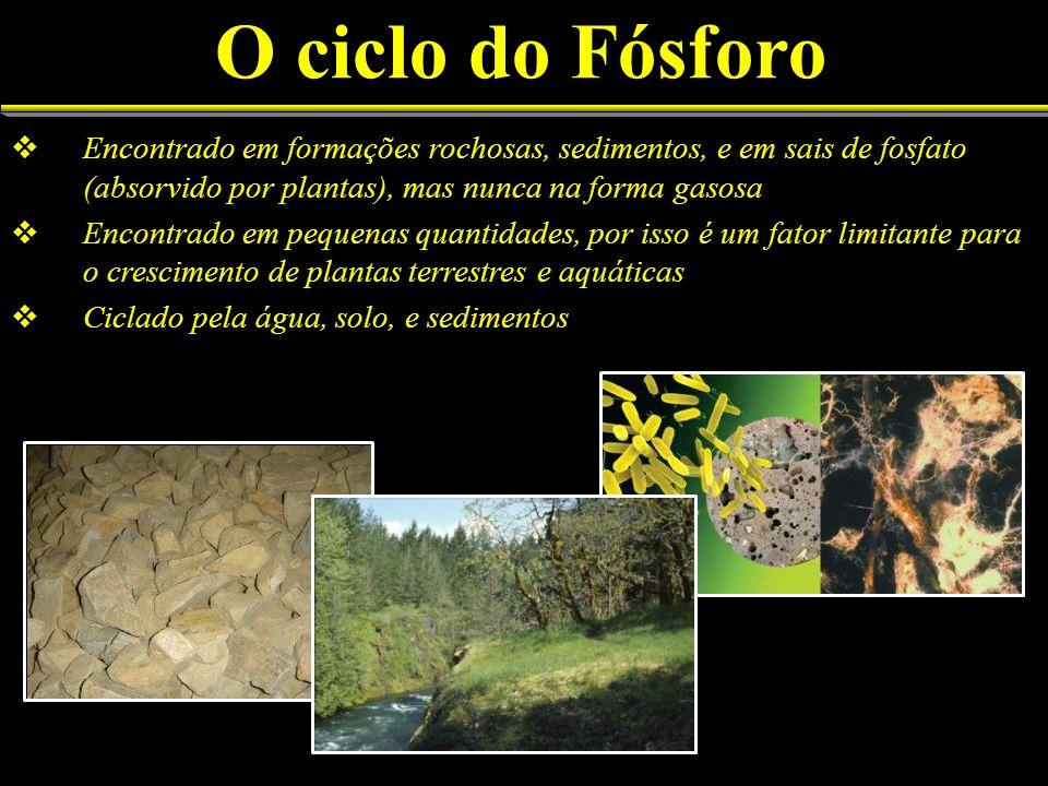 O ciclo do Fósforo Encontrado em formações rochosas, sedimentos, e em sais de fosfato (absorvido por plantas), mas nunca na forma gasosa.