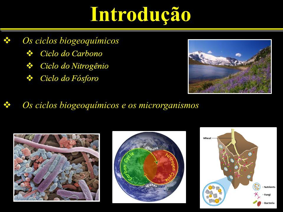 Introdução Os ciclos biogeoquímicos