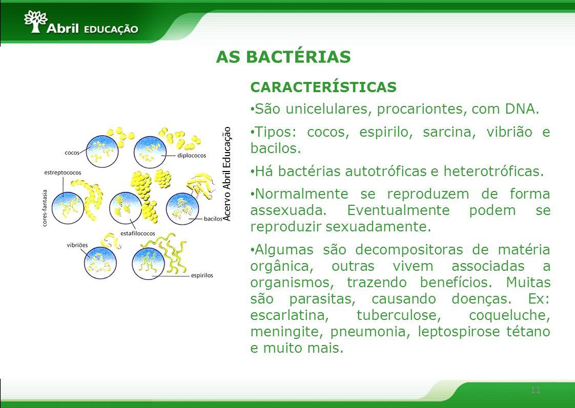 AS BACTÉRIAS CARACTERÍSTICAS São unicelulares, procariontes, com DNA.