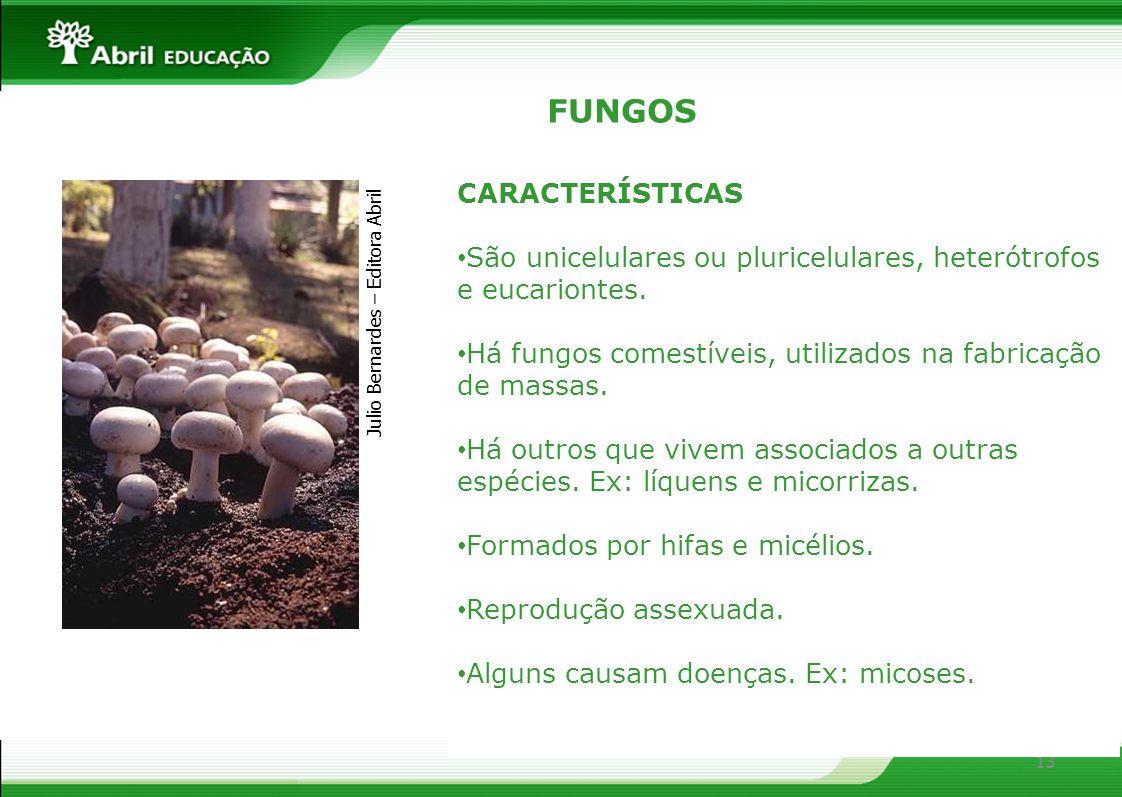 FUNGOS CARACTERÍSTICAS