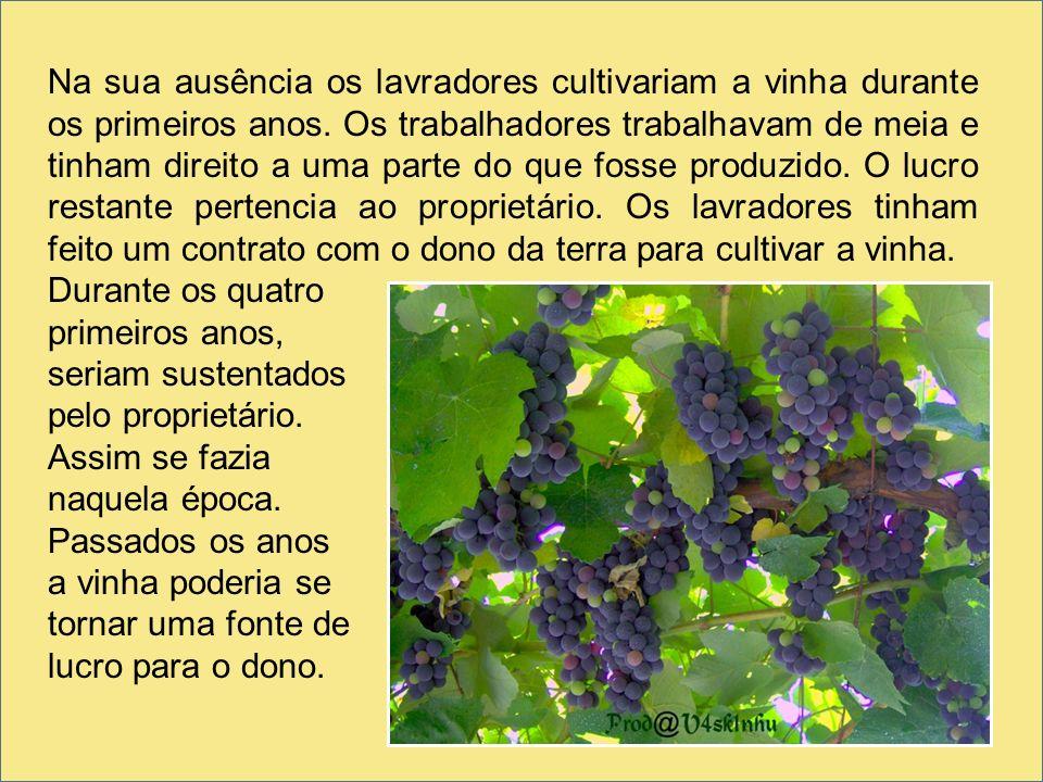 Na sua ausência os lavradores cultivariam a vinha durante os primeiros anos. Os trabalhadores trabalhavam de meia e tinham direito a uma parte do que fosse produzido. O lucro restante pertencia ao proprietário. Os lavradores tinham feito um contrato com o dono da terra para cultivar a vinha.
