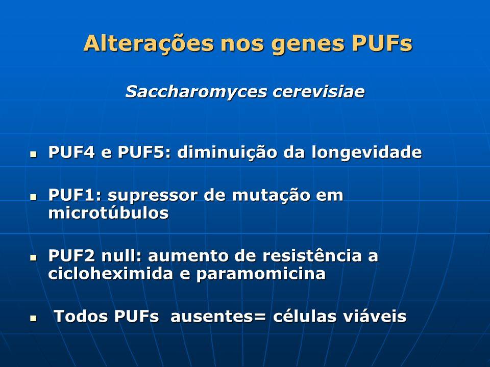 Alterações nos genes PUFs Saccharomyces cerevisiae