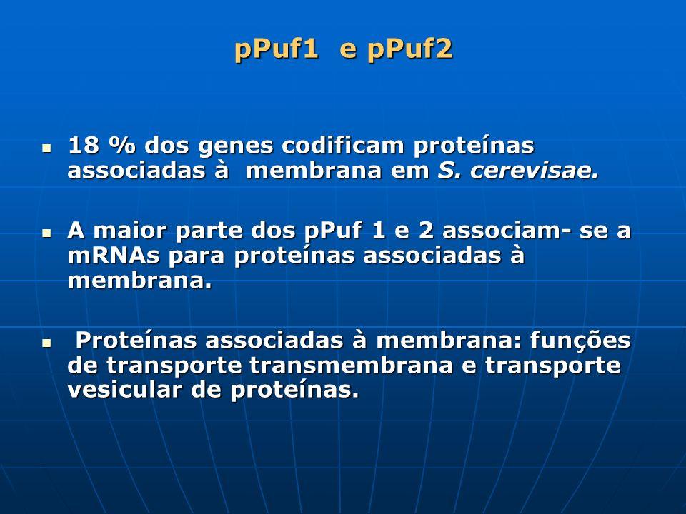 pPuf1 e pPuf218 % dos genes codificam proteínas associadas à membrana em S. cerevisae.