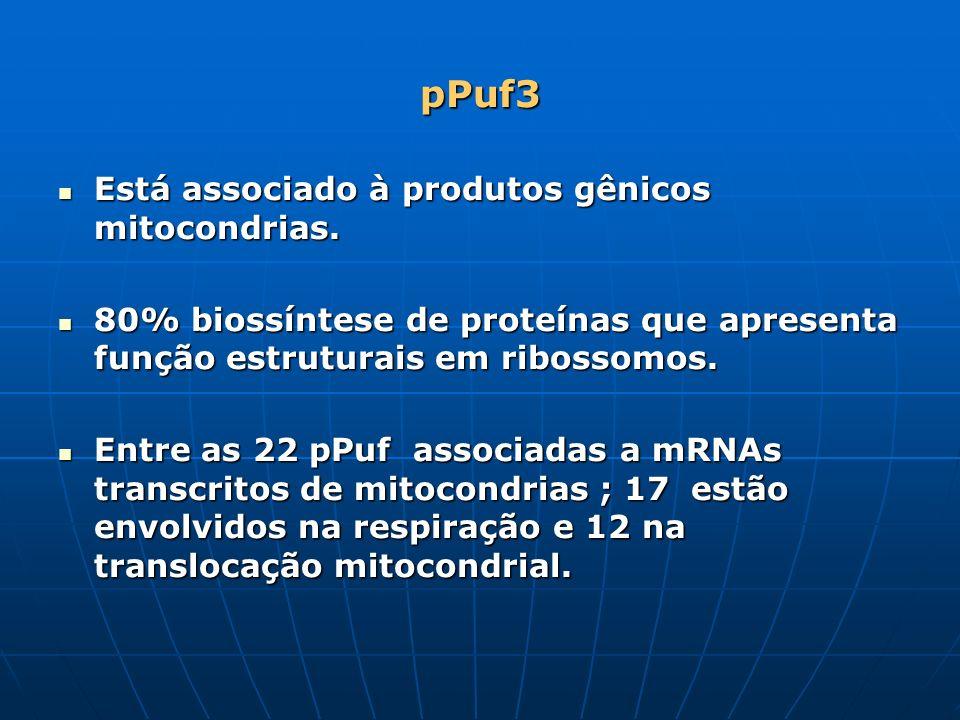 pPuf3 Está associado à produtos gênicos mitocondrias.