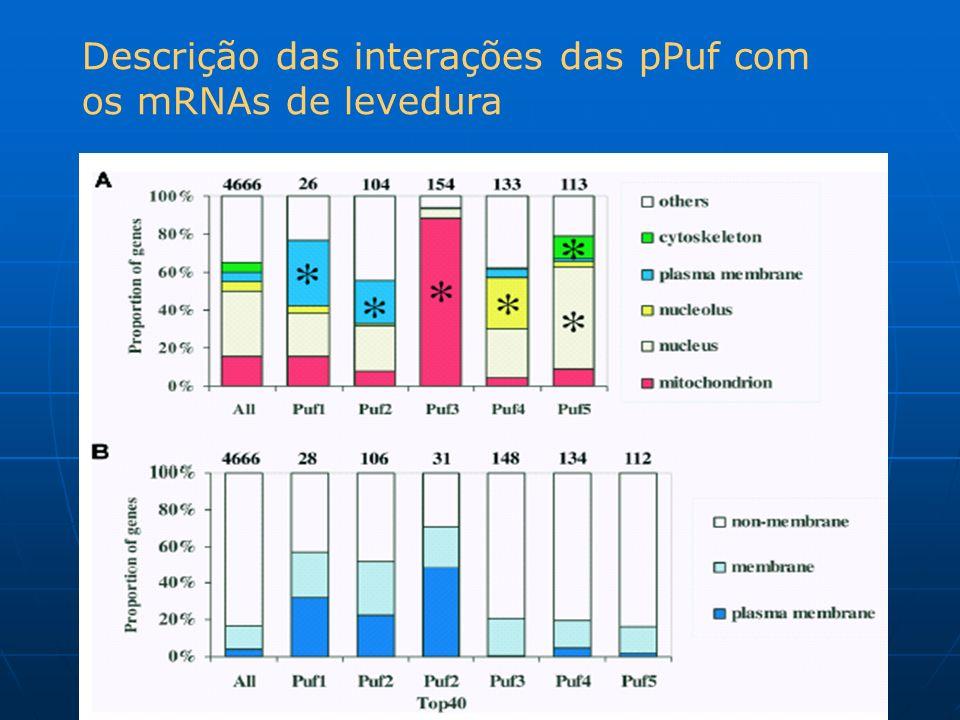 Descrição das interações das pPuf com os mRNAs de levedura